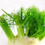 Can Guinea Pigs Eat Fennel Greens?