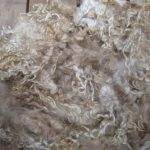 Can Guinea Pigs Eat Fleece?