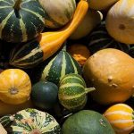 Can Guinea Pigs Eat Gourds?