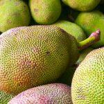 Can Guinea Pigs Eat Jackfruit?
