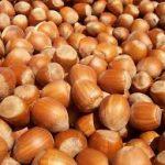 Can Guinea Pigs Eat Hazelnuts?
