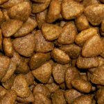 Can Guinea Pigs Eat Dry Cat Food?