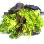 Can Guinea Pigs Eat Fancy Lettuce?