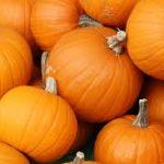 Can Guinea Pigs Eat Pumpkin?