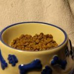 Can Guinea Pigs Eat Dog Food?