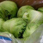 Can Guinea Pigs Eat Iceberg Lettuce?