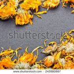 Can Guinea Pigs Eat Dried Marigolds?